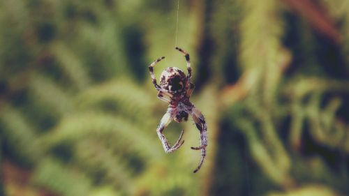 animal arachnid close-up