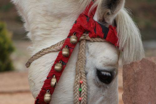 animal horse detail
