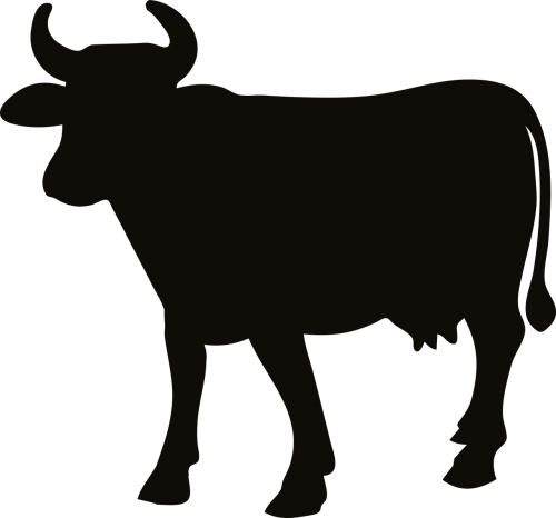 animal cattle cow