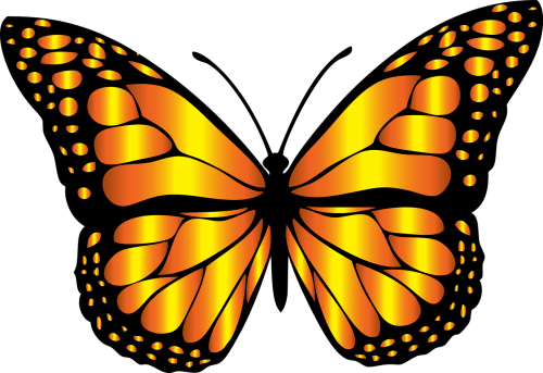 animal butterfly chromatic