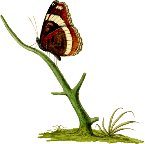 animal butterfly insect