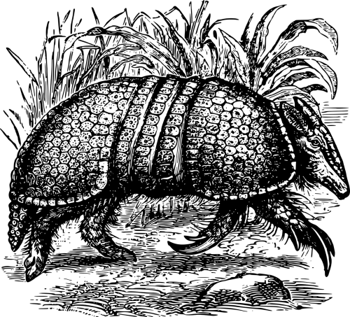 animal armadillo armor