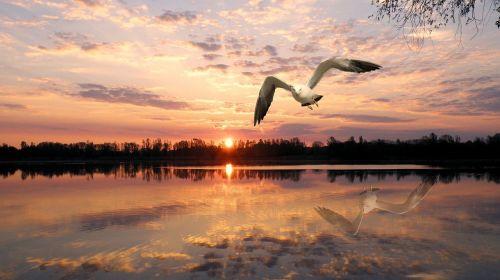 animal at dusk sunset