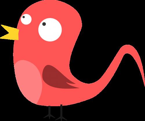 animal bird cock