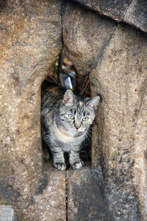 animal cat wall