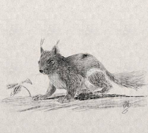 animal squirrel digital