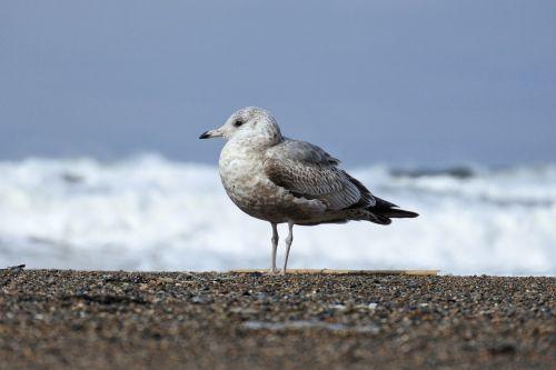 animal sea beach