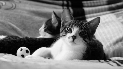 animal cat kittens