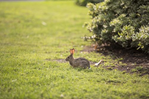 animal bunny rabbit