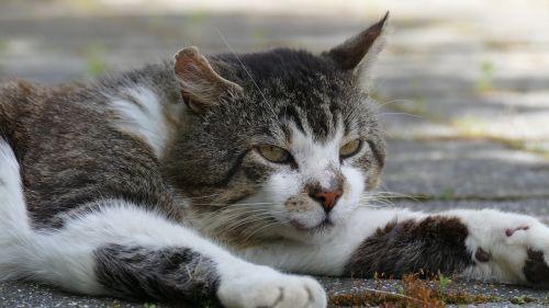 animal cat cat's eyes