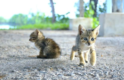 animal animals cat