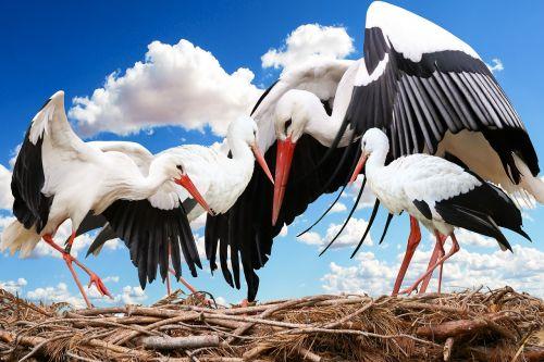 animal bird stork