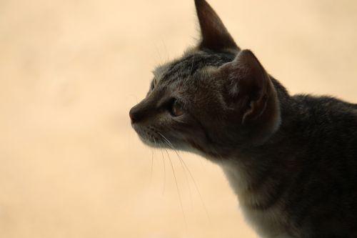 animal cat kit