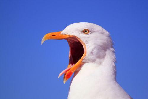 animal animals bird