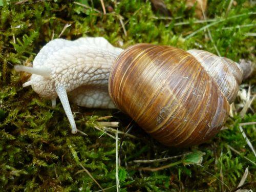 animal snail housing-auger