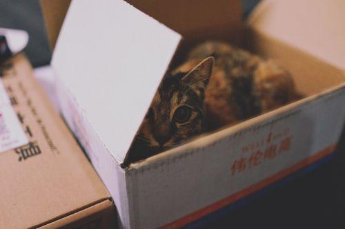 animal cat carton