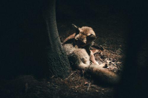 animal wildlife trunk