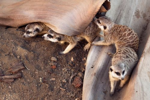 animal wildlife sand