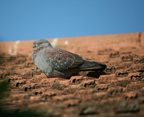 animal bird rock pigeon