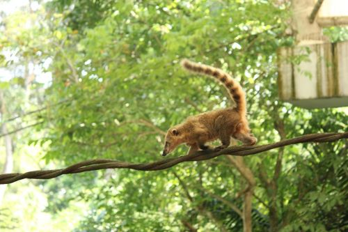 animal zoo zoo animals