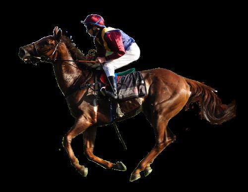 animal horse racing