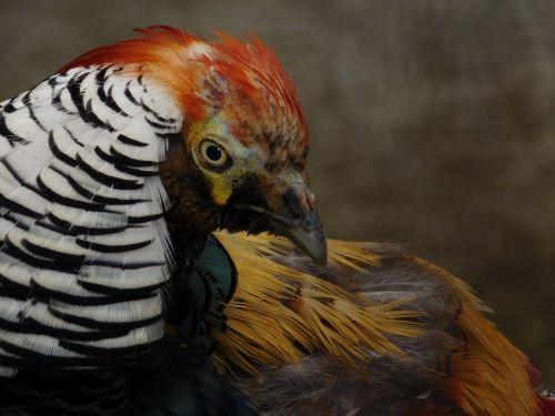 gyvūnas,gamta,laukiniai,spalvinga,laukinė gamta,natūralus,paukštis,mielas