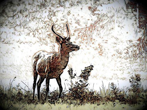 animal deer trace