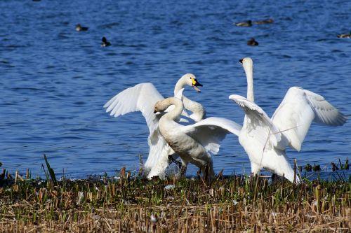 animal lake japan