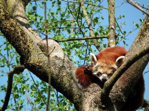 animal nature squirrel