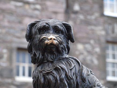 animal dog portrait