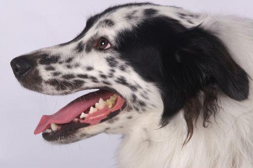 animal mammal dog