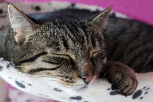 animal cat cute