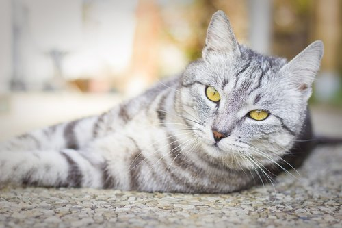 animal  cute  cat