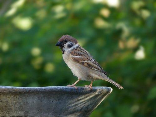 animal  bird  sparrow