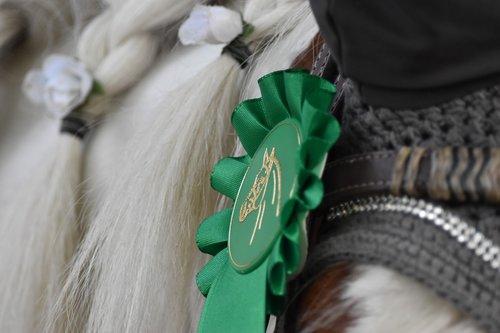 animal  horse  pony