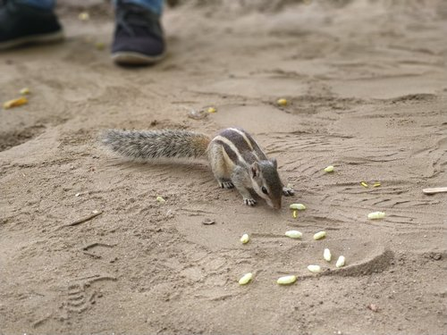 animal  squirrel  hunger