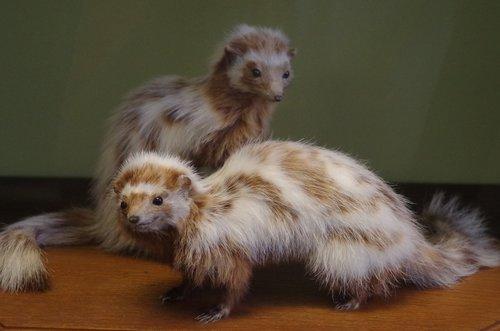 animal  furry  hairy