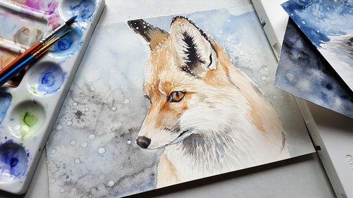 animal  fox  nature