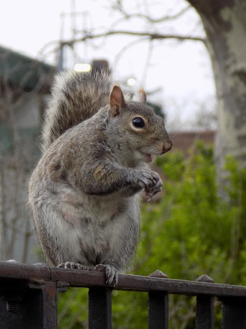 animal  gnaw  rodents