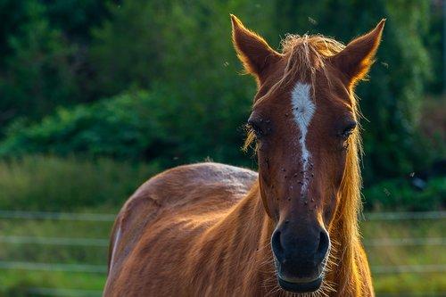 animal  horse  nature
