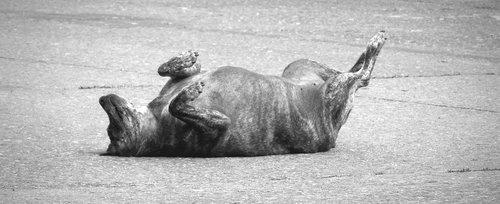 animal  dog tramp  pet