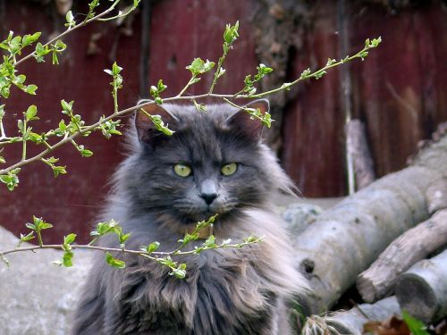 animal cat feline