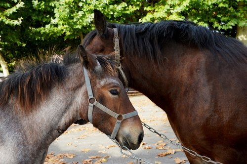 animal  horse  mammals