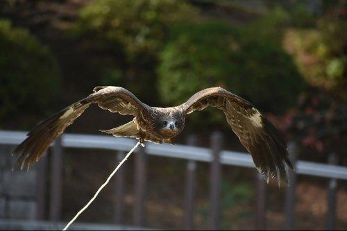 animal  natural park  bird