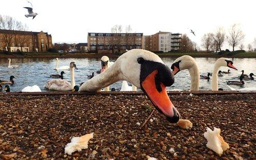 animal  beak  birds