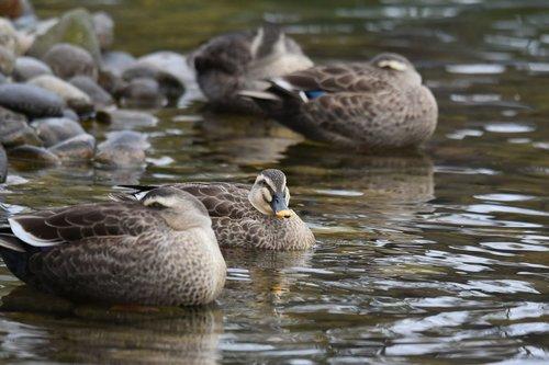 animal  pond  waterside