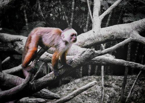 animal  ape  mono
