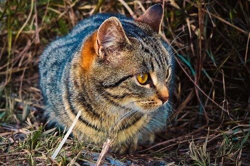 animal  cat  tiger