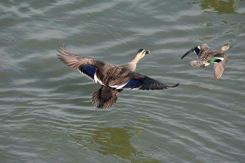animal  river  waterside