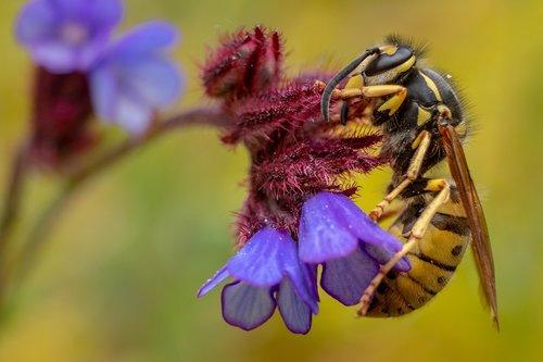 animal  greece  hornet